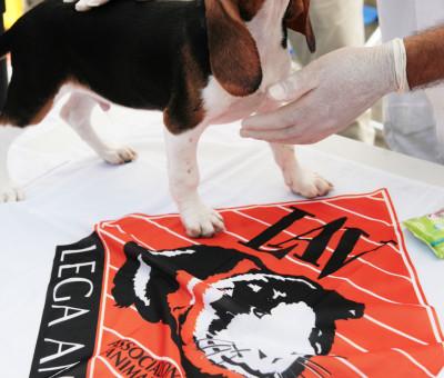 L.A.V. Lega Anti Vivisezione_ Report Beagle rescue